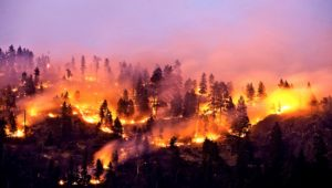 protect your home against wildfires with permapanel